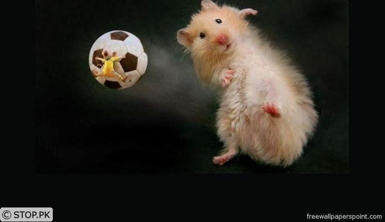 Tikus-Tikus Sepakbola