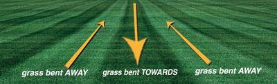 arah rumput
